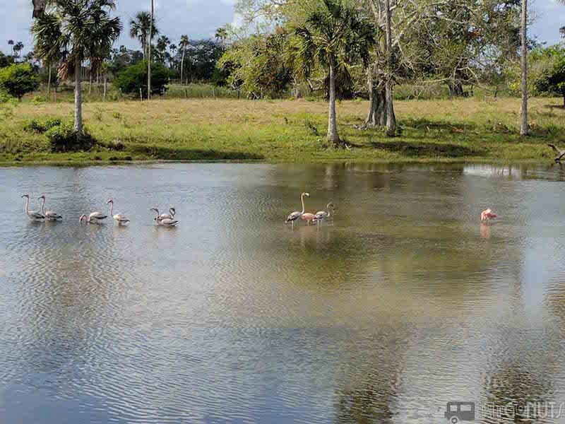 Flamingos near El Cuyo